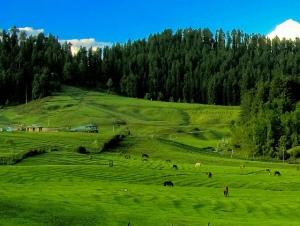 achbal,achbal gardens,aharbal,aharbal waterfall,baramullah,daksum,gulmarg,gurez,J&K,kashmir,kashmir beauty,kashmir gardens,Kashmir waterfalls,kokernag,kupwara,must see places in kashmir,pahalgam,sinthan top,sonmarg,yusmarg, must see places in kashmir,heaven onearth,places you must see,must see places in india, must see places in asia,