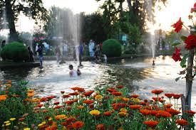 asia's largest tulip garden, badamwari, chashma shahi, kashmir, kashmir in spring, kashmir mustard fields, kashmiri tulips, mehjoor, must see places in kashmir, mustard fields, nishat, Spring, tulip garden, tulip garden kashmir, tulips